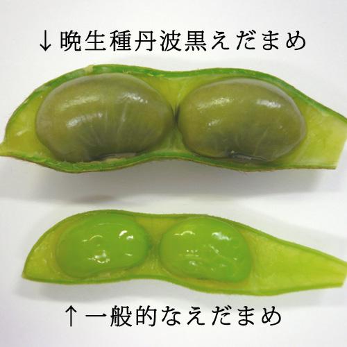 黒えだまめと一般的な枝豆の大きさ比較